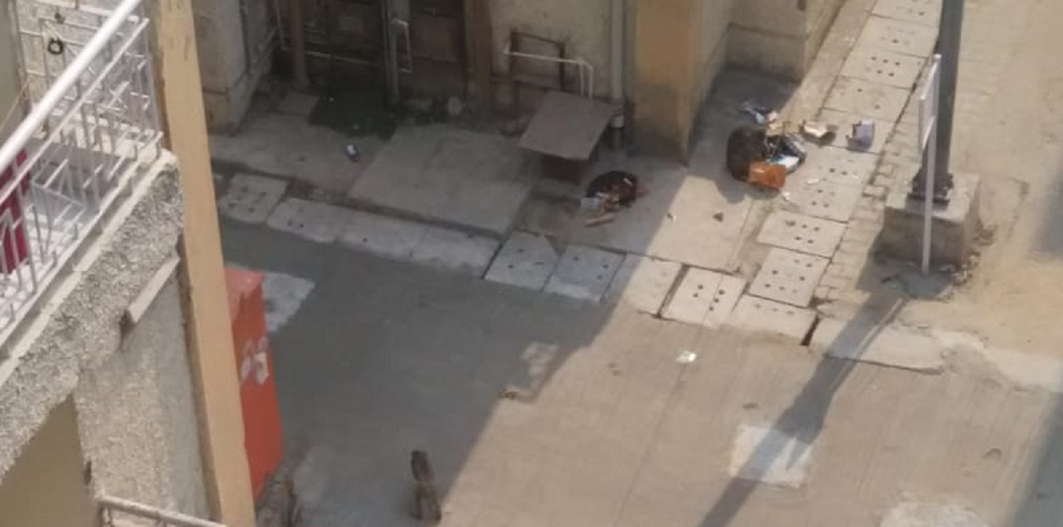 Monkey menace causes panic among residents at Vasant Kunj