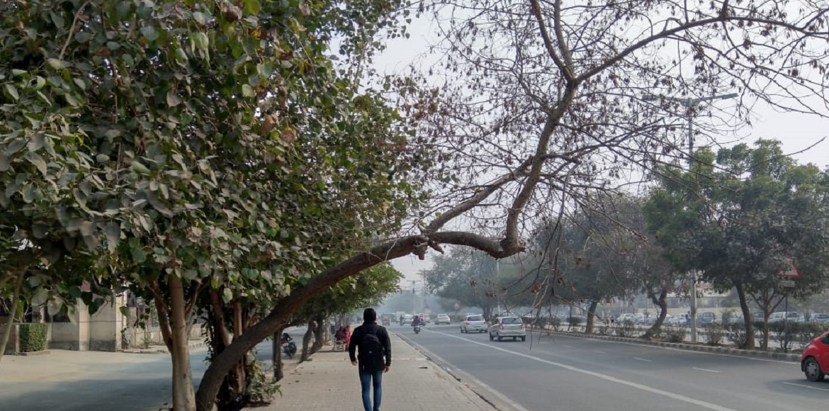 Dwarka: Dead trees pose a threat to commuters on road