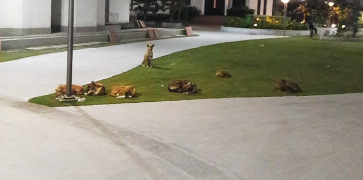 Stray dogs menace haunts residents of Ecovillage 1; mgmt, authorities helpless