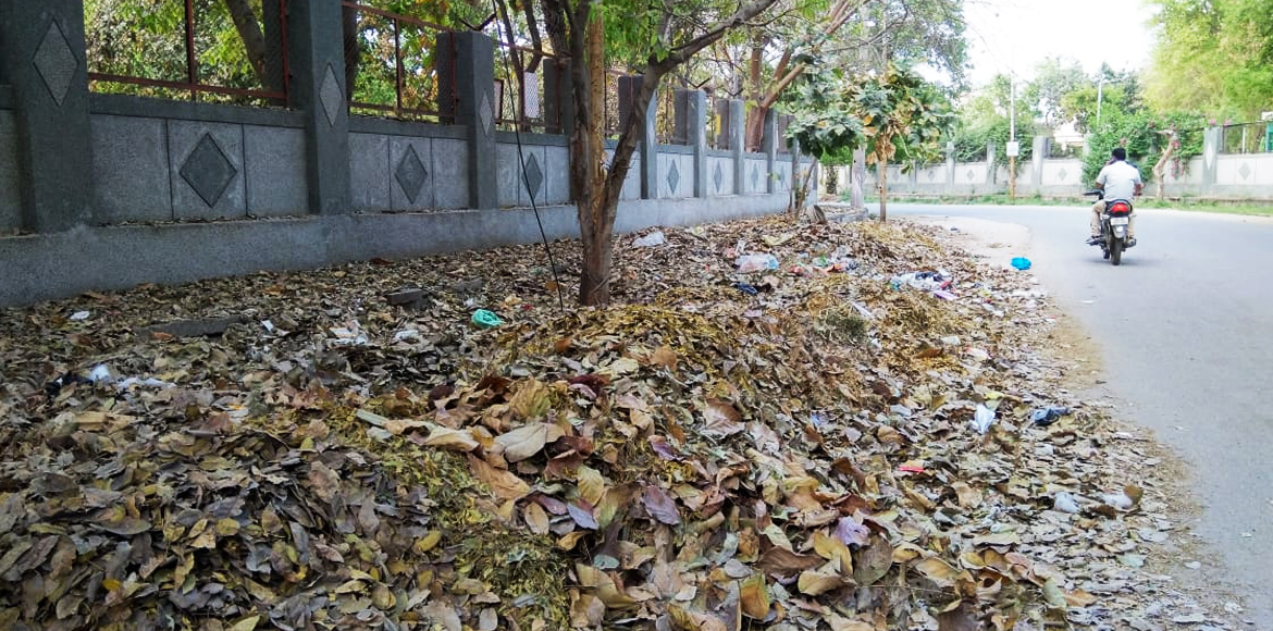 Dry leaves becoming nuisance for Dwarka residents; civic agencies blamed