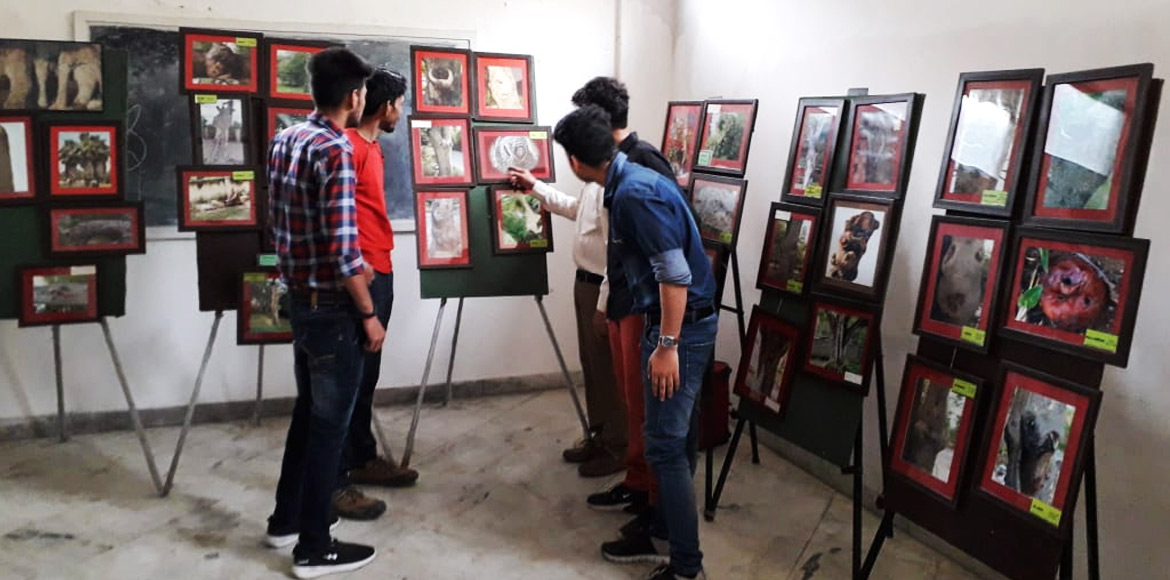 Photo exhibition in Dwarka takes people closer to nature