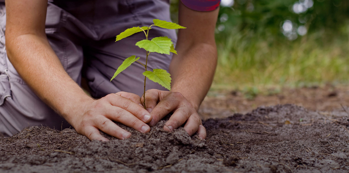Sector 71 residents welcome Noida Authority's 'move' to plant 1500 saplings