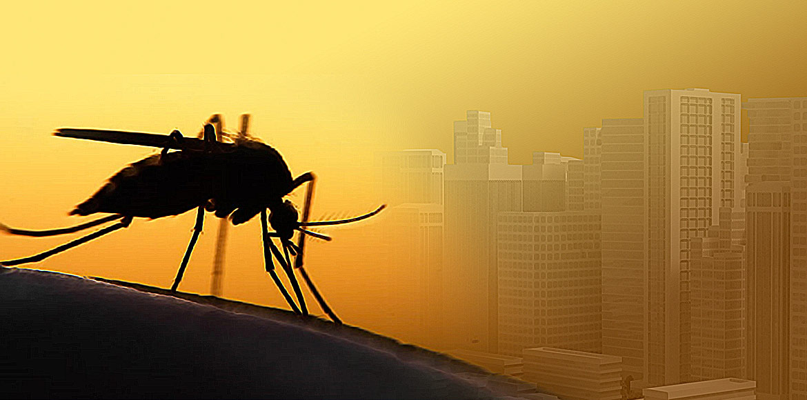GB Nagar: Builders to be held accountable for mosquito breeding at premises