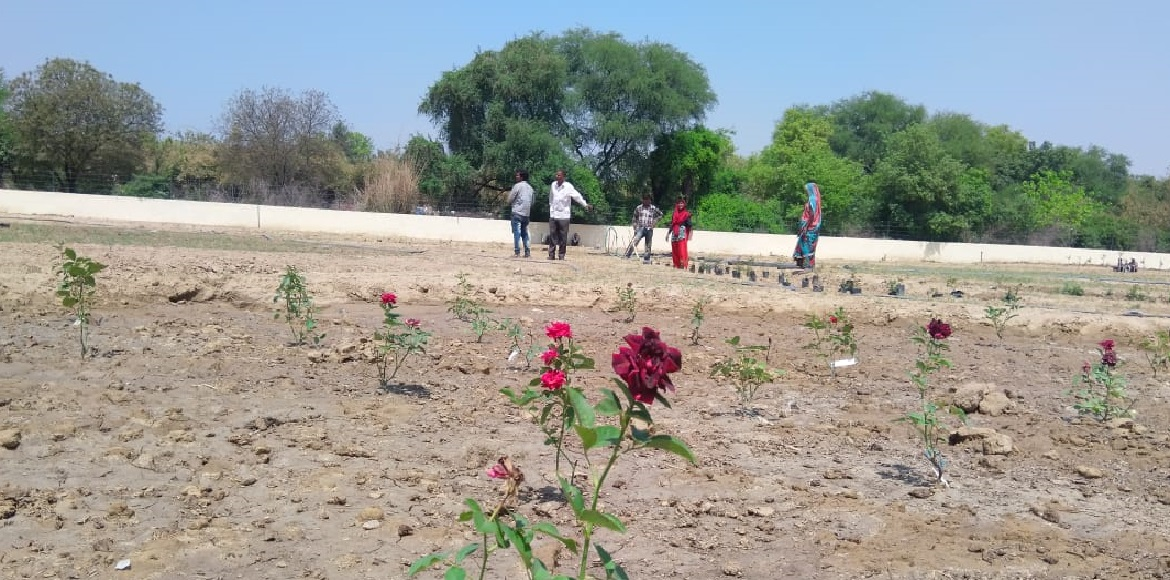 Dwarka to get its first rose garden soon