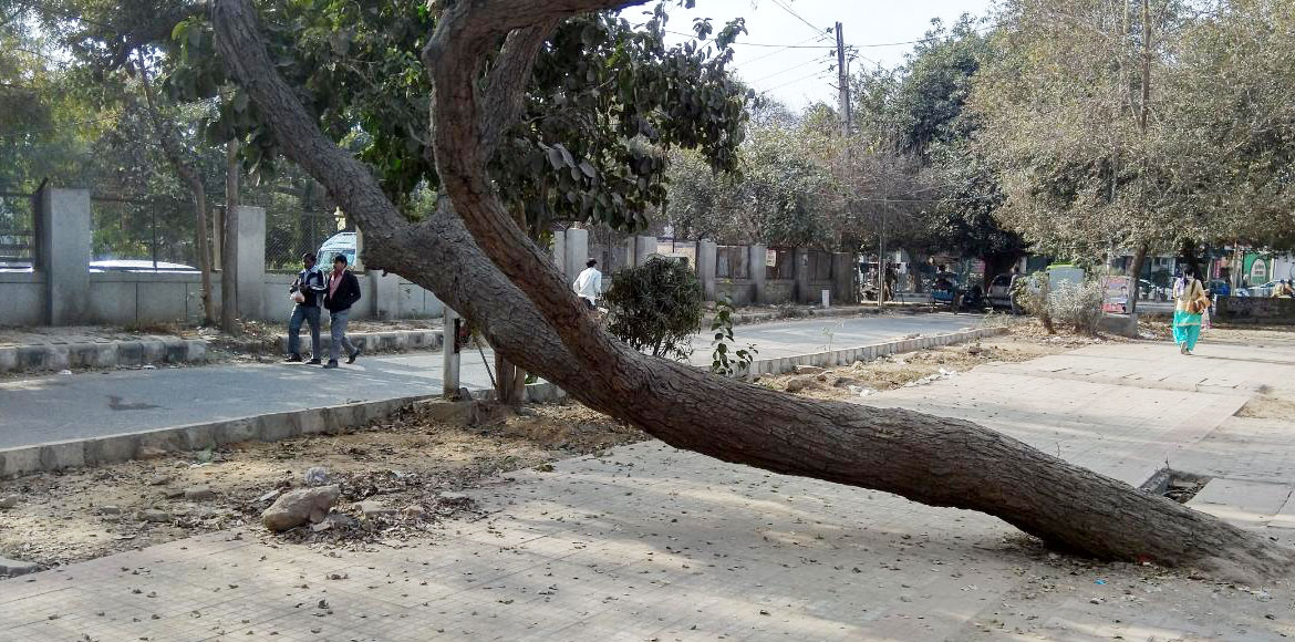 Residents demand removal of dead trees across Dwarka