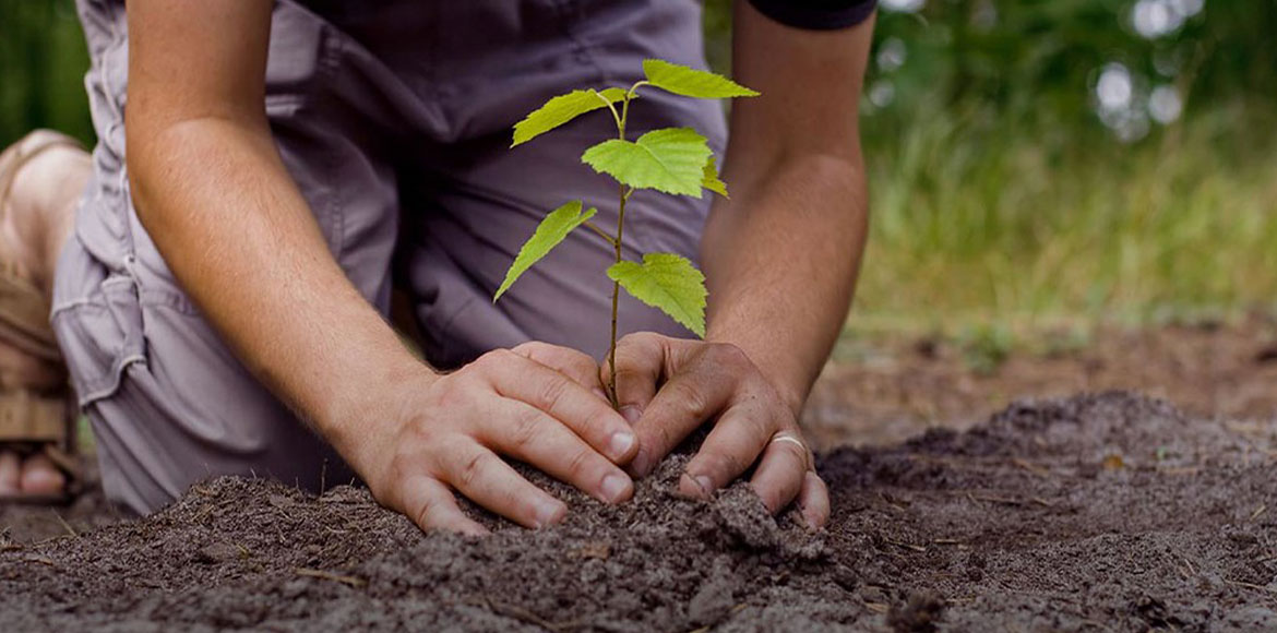 NOFAA invites residents across Noida to take up 'one sapling a day' challenge