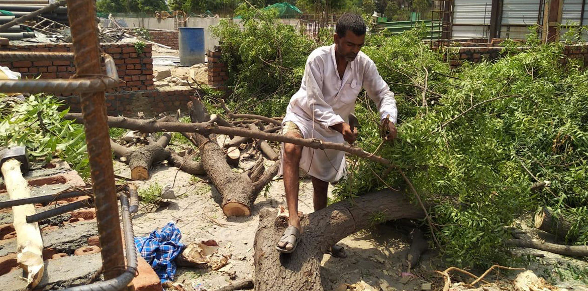 Noida: Residents complain against chopping of full-grown tree at Sec 137