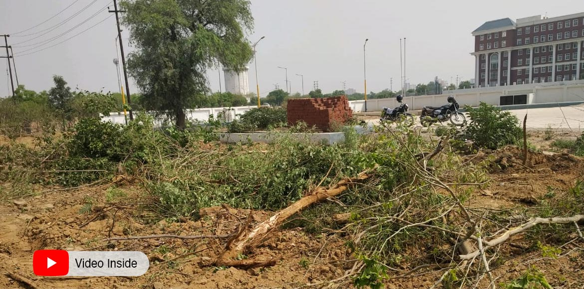 NEFOWA furious over felling of trees; raises matter to concerned authorities