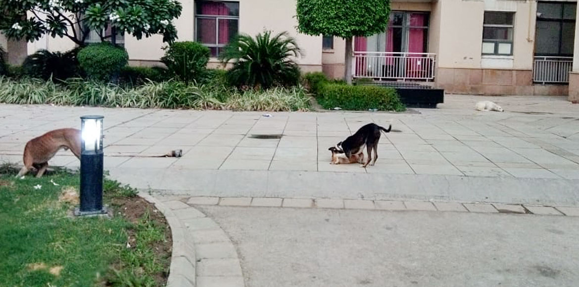 Unitech Horizon: Residents wary of strays; complai