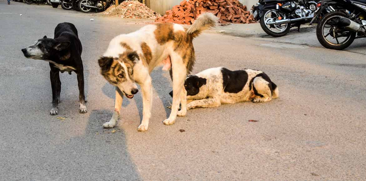 Noida: Jaypee Wish Town residents complain against stray dogs menace