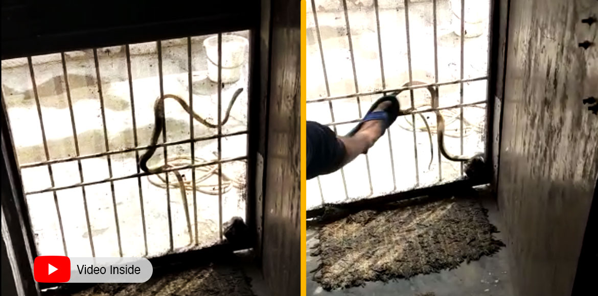 Noida: Residents get terrified after spotting of snake at doorstep in Sec 108