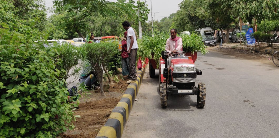 To make Dwarka lush green, civic bodies on plantation spree this monsoon