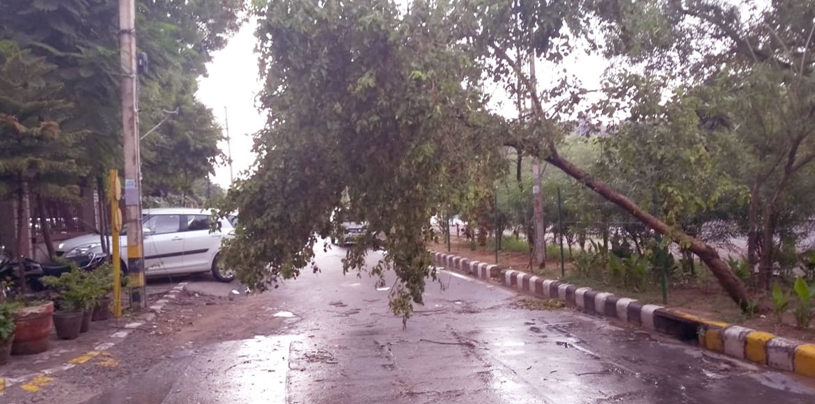 Dangerously bent tree pose threat to commuters in Dwarka