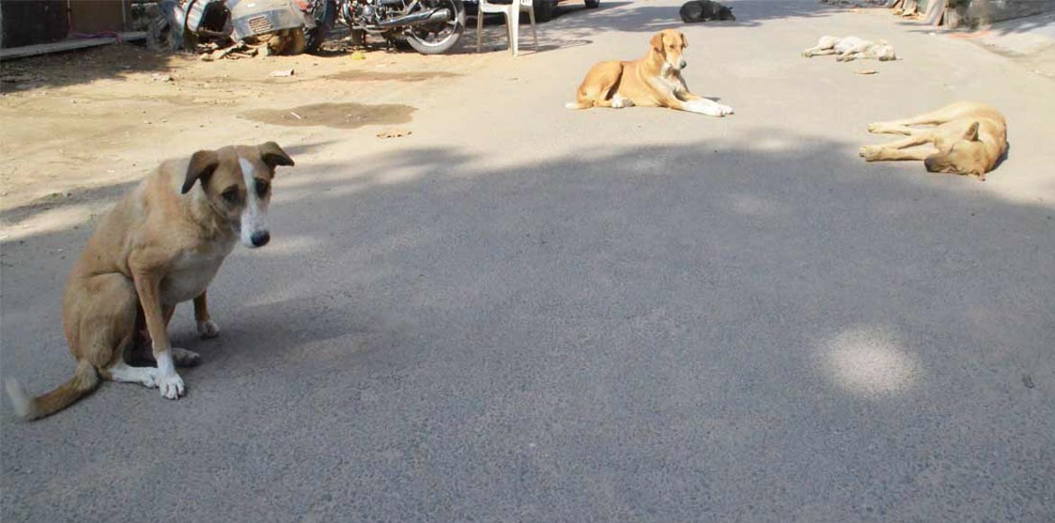 Indirapuram: Woman attacked by pack of dogs in Shi