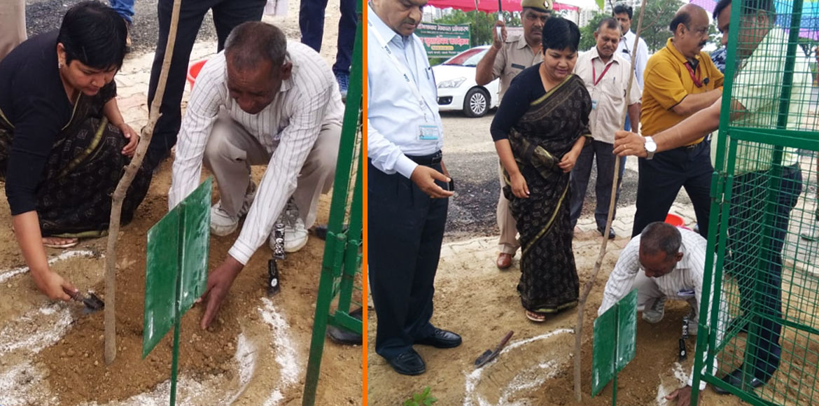 GDA plants 3000 saplings at Raj Nagar Extension