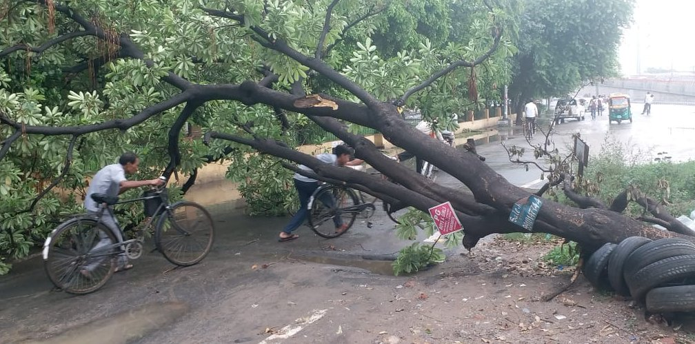 Fallen trees in Noida cause inconvenience to commuters