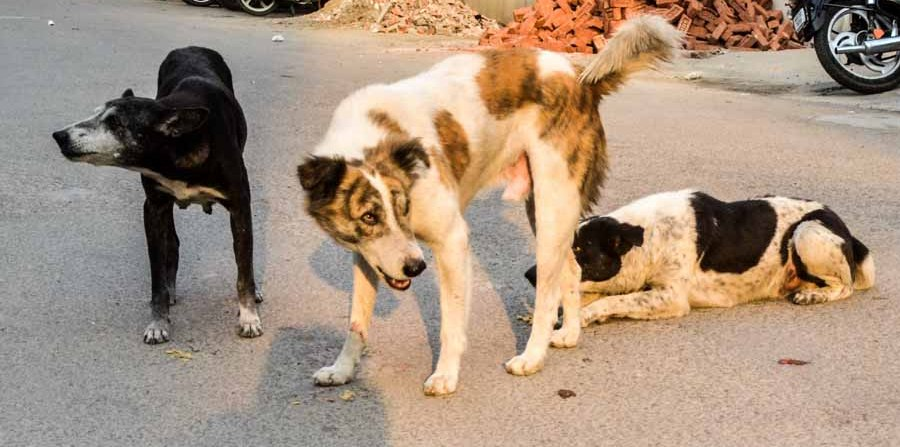 Ghaziabad: Shipra Sun City AOA aims to make stray dog shelter in society