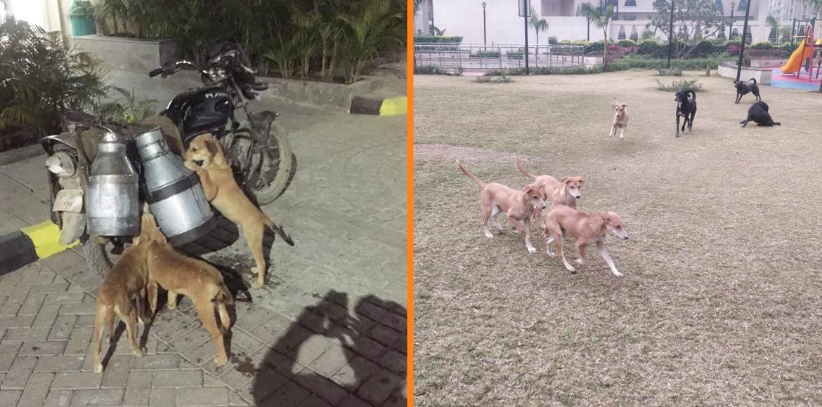 Residents in fear because of frequent dog bite incidents at Golden Palm