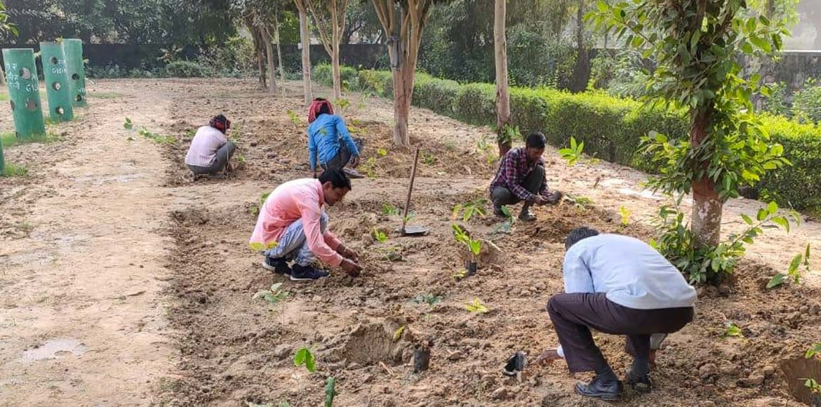 Herbal park offering medicinal plants being developed at Dwarka