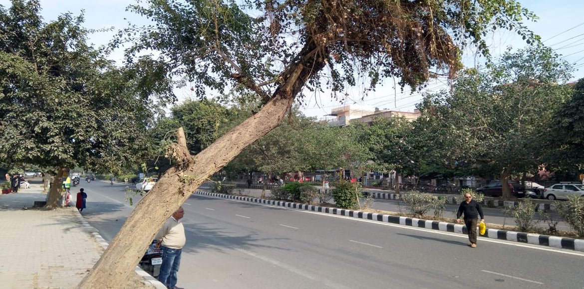 Dwarka: Inclined trees pose threat to commuters; a