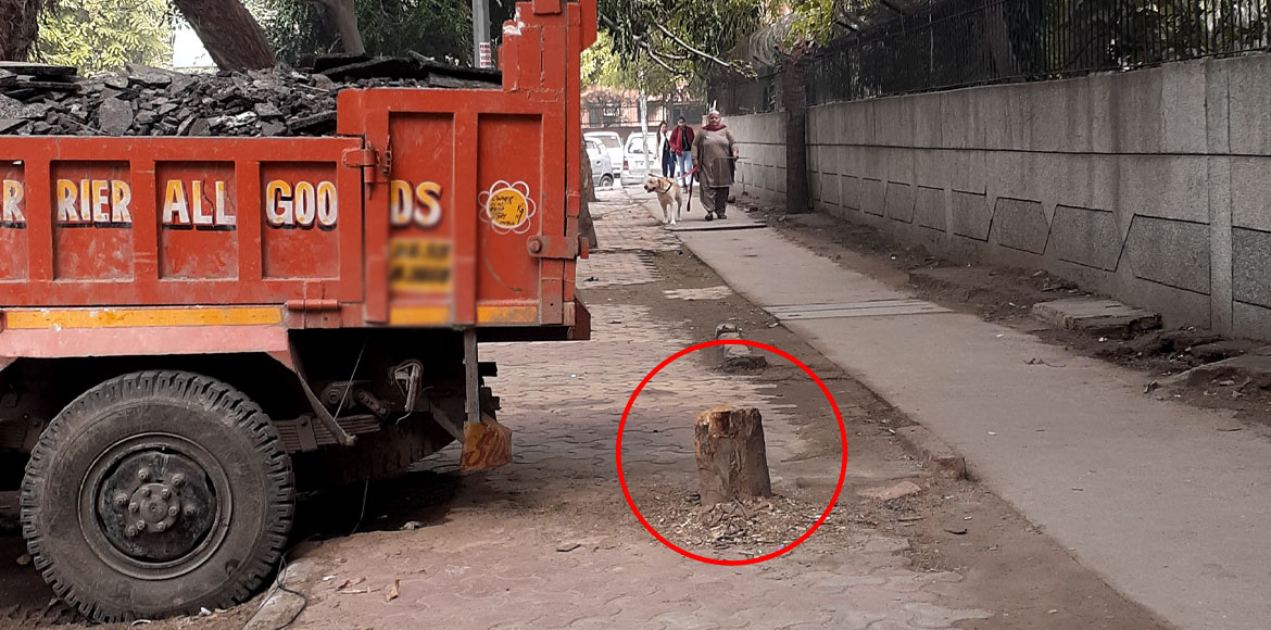 Tree felled by truckers, resident raises security issue