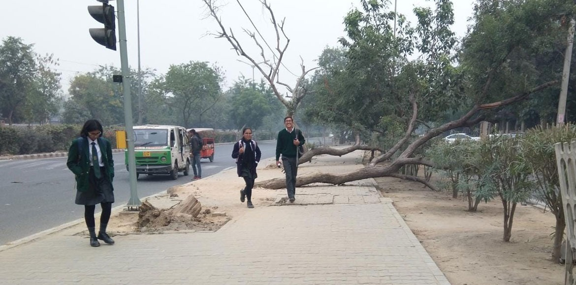 Inclined trees make strolling difficult on footpaths across Dwarka