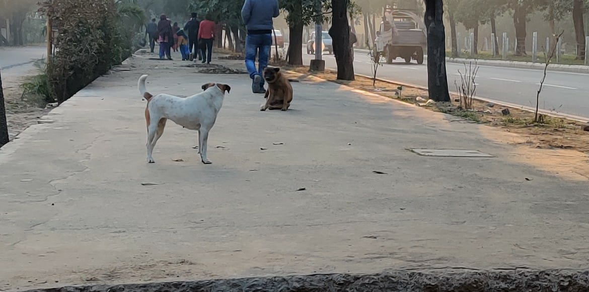 Noida residents demand effective policy to control stray dog menace