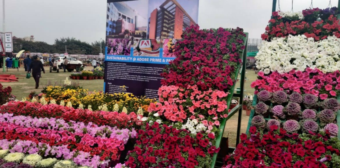 Noida flowers show opens on theme of Dianthus