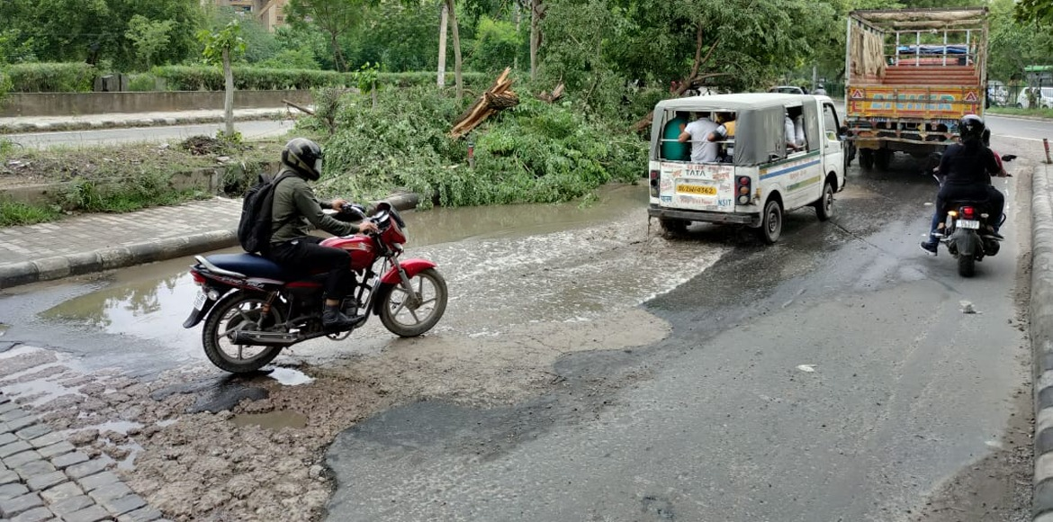 Tree falling becomes common during rains in Dwarka