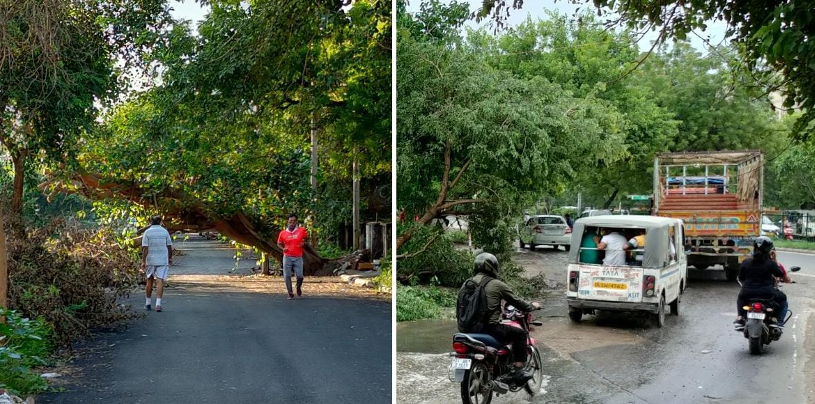 Commuters beware: Many roadside trees could fall during rains in Dwarka