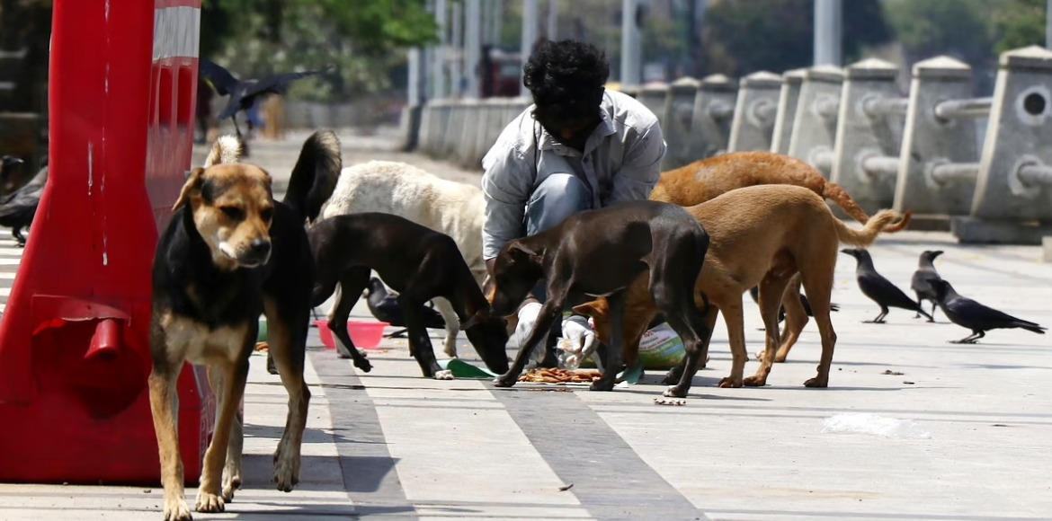 Noida residents demand animal shelters to address dog bite incidents