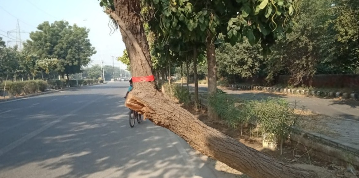 Inclined trees become cause of worry for commuters in Dwarka