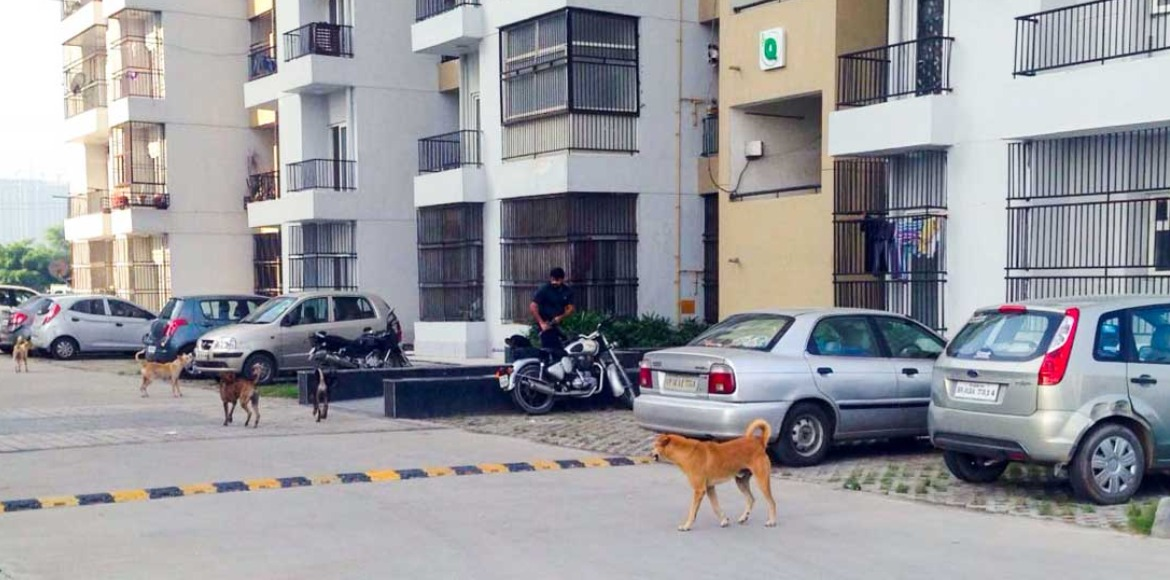 Noida residents insist for developing stray animal