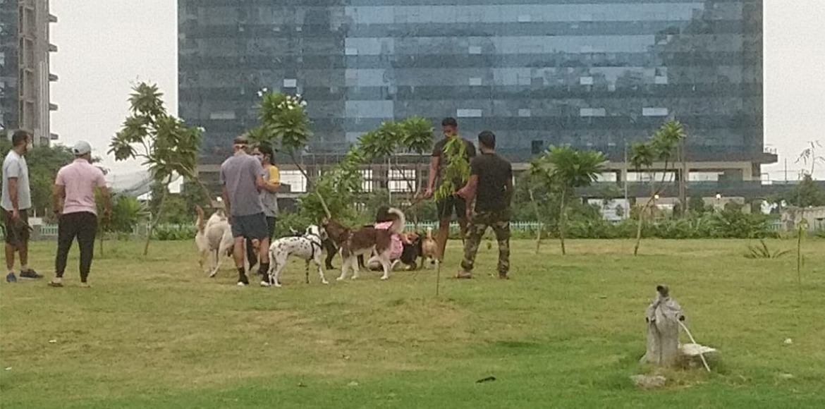 Noida Authority approves dedicated park for pet dogs in Sec 137