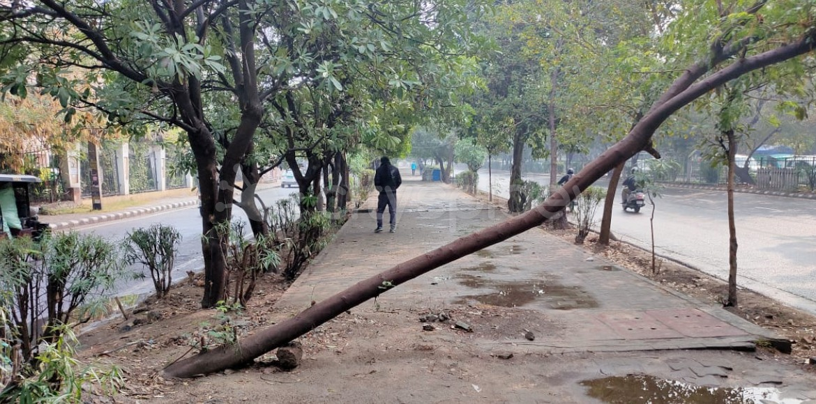 Tree collapse common during rains in Dwarka