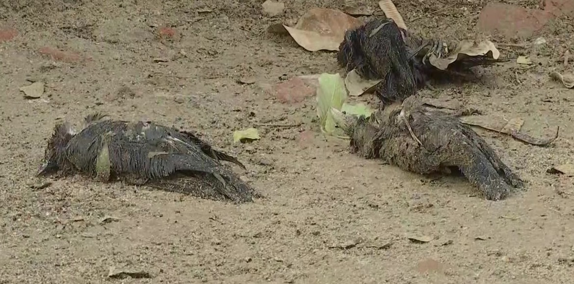 Alarmed residents report dead birds from two new locations in Dwarka