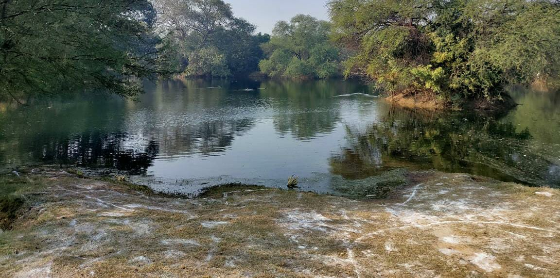 Dwarka: Duck found dead at water body inside DDA park in Sec 23