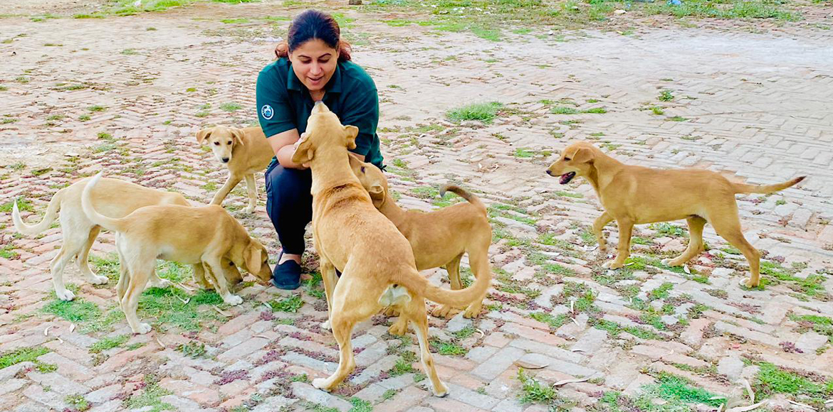 This Punjabi Bagh lady feeds hundreds of strays