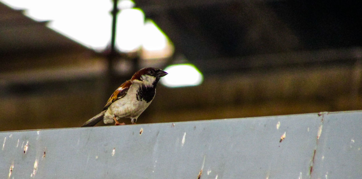 REPLUG: State bird of Delhi, the sparrow, nests in Dwarka Metro stations