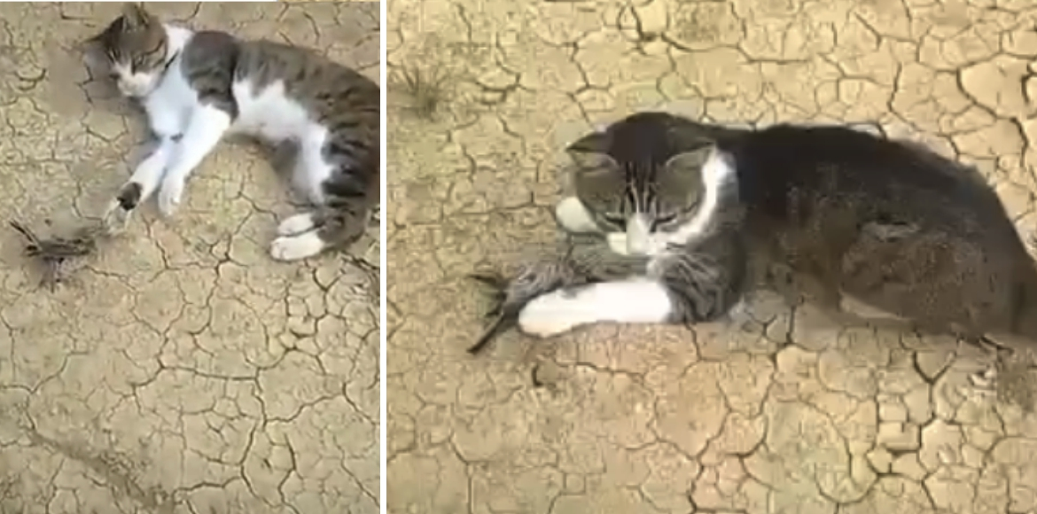 April Fool's Day: Bird does prank with cat, video