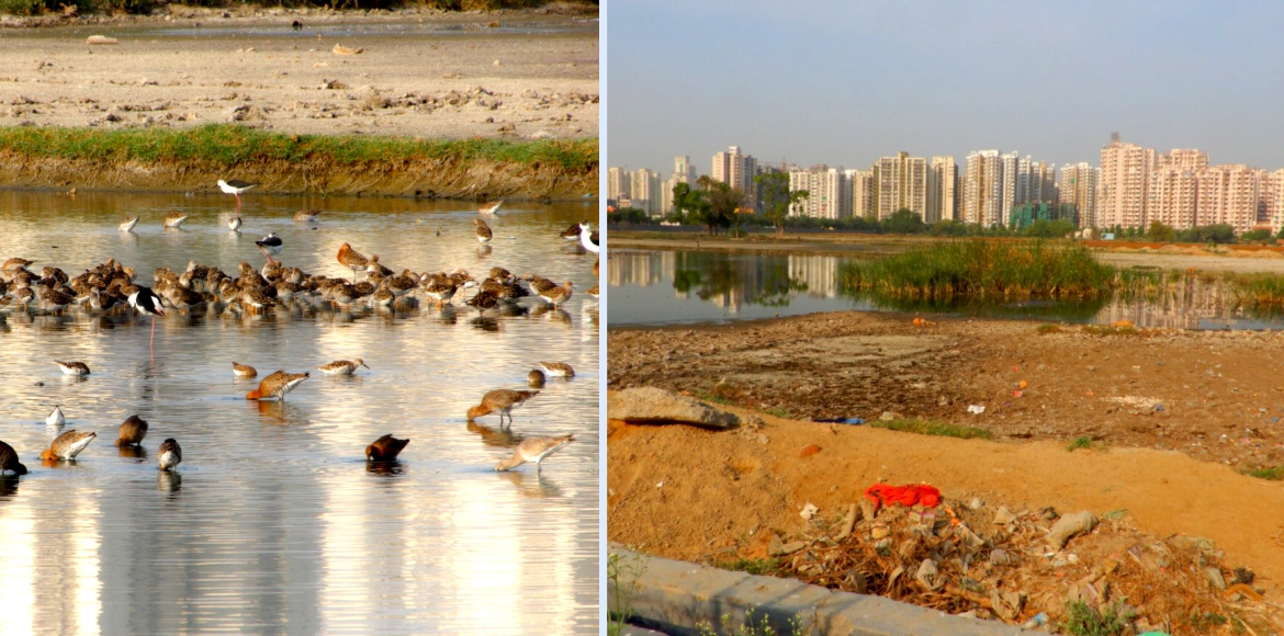 Noida: Drying up of contaminated waterbody threatens birds' migration