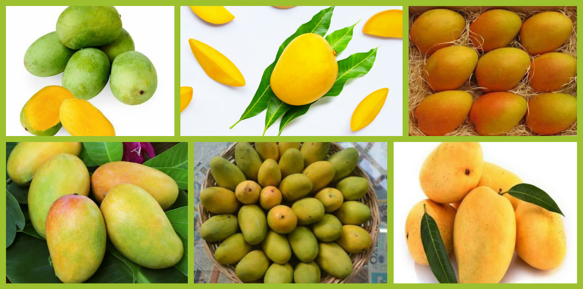 Mango Katha: Many varieties and unending romance with the fruit