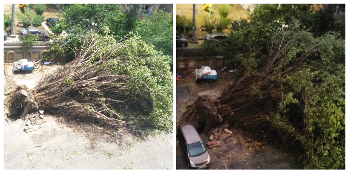 Concretisation is killing the trees in Dwarka