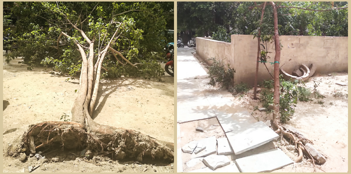 Concretisation around trees needs to be sorted in