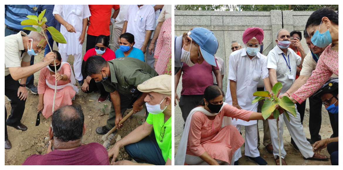 Dwarka: Saplings of different species planted at c