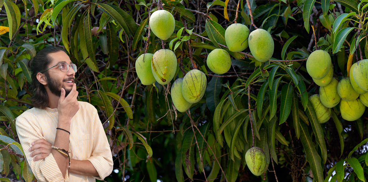 Love for mangoes is as old as the fruit itself