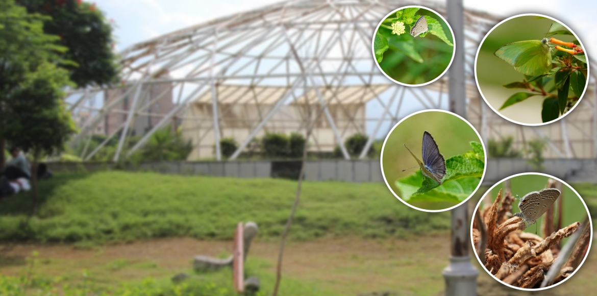 Noida- Butterflies finally make entry in one of Noida's largest parks