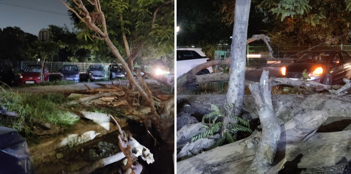 Dwarka: Uprooted trees at Dwarka, Sector-9 lie on