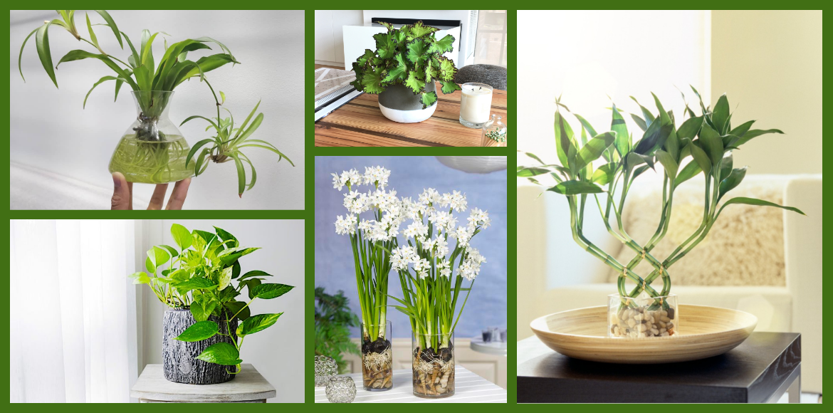 Deck up your house with these water plants