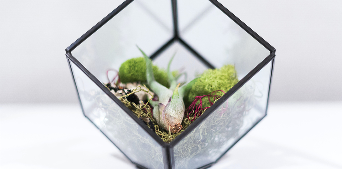 Air plants with care guide